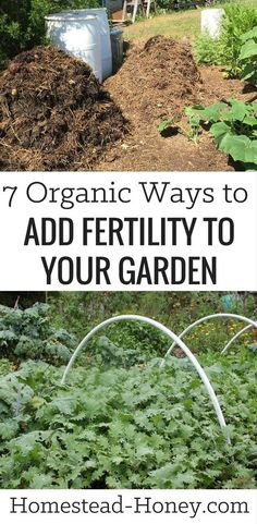 vegetable gardening tips PLANTS GARDENING Pinterest Veg