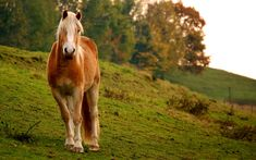 equines - Google Search