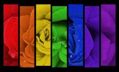 Rainbow_Colours_by_Angel_Whisperer