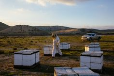 A Bee Mogul Confronts the Crisis in His Field - NYTimes.com
