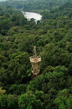 40 meter Observation Tower, Panama Rainforest Discovery Center. The Panama Rainforest Discovery Center is an ecotourism and environmental education project administrated by the Fundación Avifauna Eugene Eisenmann, of which the objective is the conservation of birds through environmental sustainability projects.                               www.selectlatinamerica.co.uk  (V)