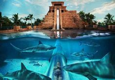 Water slide thru the sharks in Nassau