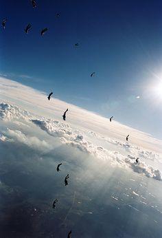 "exterum: "" Skydive mergulho em ala by Rick Neves on Flickr. """