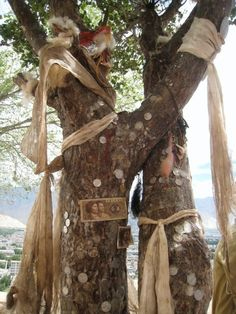 Tibetan prayer tree