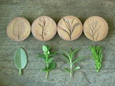 Stoneware Herb Magnets on NS Pottery. These look imprinted, very nice! - Kee Creates - Stoneware Herb Magnets on NS Pottery. These look imprinted, very nice! Stoneware Herb Magnets on NS Pottery. These look imprinted, very nice! Clay Stamps, Ceramic Pottery, Ceramic Art, Ceramic Plates, Ceramic Jewelry, Clay Jewelry, Jewellery, Clay Projects, Clay Crafts