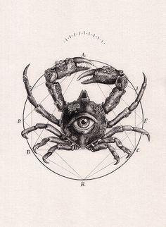Scientific Illustration | turecepcja: Drawings by Peter Carrington