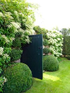 A garden door surrounded by boxwood