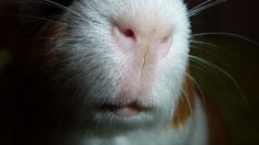 little nose :-) Animals, Animales, Animaux, Animal, Animais