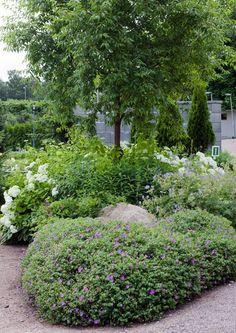 Kukoistavat perennat: kasvupaikat, lajit ja lisääminen | Meillä kotona