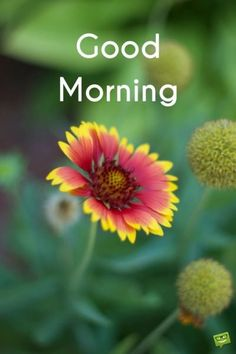 Beautiful Good Morning Have A Nice Day Images Hd Free Download