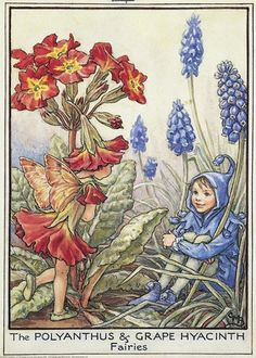 Illustration for the Polyanthus and Grape Hyacinth Fairies from Flower Fairies of the Garden. A girl polyanthus fairy stands on the left talking to a boy grape hyacinth fairy seated facing her. Author / Illustrator Cicely Mary Barker