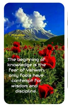 Proverbs 17 17, The Fool, Knowledge, Wisdom, Food, Essen, Meals, Yemek, Eten