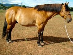 Cola - Hearts & Horses