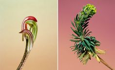 photographer Erwan Frontin's  wildflowers, all of which he discovered while traveling throughout southern France.