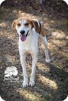 Fayetteville Nc Hound Unknown Type Mix Meet Howie A Dog For