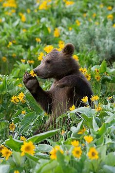 Smell The Flowers!
