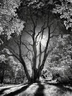 """""""Character is like a tree and reputation like a shadow. The shadow is what we th. - """"Character is like a tree and reputation like a shadow. The shadow is what we think of it; the tree is the real … pinned with – www. Landscape Photography, Nature Photography, Travel Photography, Dance Photography, Nature Architecture, Halloween Trees, Ansel Adams, Black And White Pictures, Pics Art"""