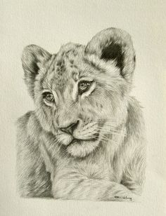 Best pencil drawing of a Lion Pencil Drawings Of Animals, Animal Sketches, Lion Cub Tattoo, Lion Sketch, Lion Drawing, Drawn Art, Lion Art, Wildlife Art, Animal Paintings