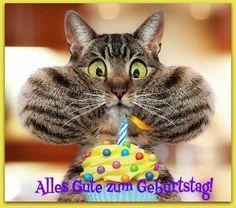 Lustige Katze mit Geburtstagstorte: Alles Gute zum Geburtstag! - ツ GeburtstagsBilder, Grußkarten und Geburtstagsgrüße ツ