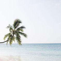 A tropical way of life  https://www.instagram.com/p/BJvUtabBL1r/