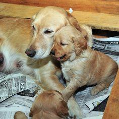 Family portrait dog style. Bark cheese.