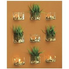 1000 images about air plants on pinterest air plants for Air plant wall art