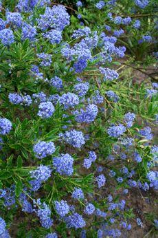 drought tolerent plants | Drought Tolerant Plants | Plant Care Leaflets | Website | All-In-One ...
