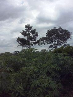 Natureza,céu,verde