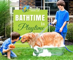 Playing with your pet during bath, helps in shooing off their bath scare!     ,