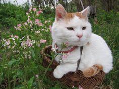 cybergata:  Spring Time with Shironeko