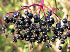 Elderflower, Fruit, Black, Evening Outfits, Eat, Food, Black People, Elder Flower