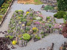Crevice garden for alpines