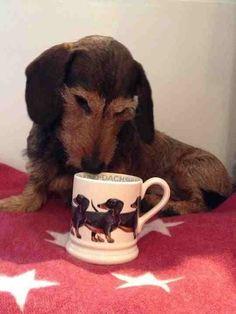 Dachshund. Emma Bridgewater pottery mug.
