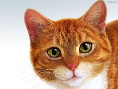 kot - Szukaj w Google