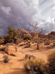 Joshua Tree National Park, Hidden Valley