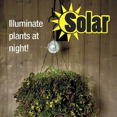SOLAR HANGING BASKET LIGHT from Get Organized