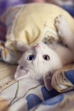 """Kittens are wide-eyed, soft and sweet, with needles in their jaws and feet. They are so cute but so sharp! I Love Cats, Crazy Cats, Kittens Cutest, Cats And Kittens, Ragdoll Kittens, Tabby Cats, Bengal Cats, Funny Cute Cats, Funny Kittens"
