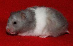 http://chs-golden-hamster.webnode.cz/ Blue - aadd