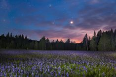 """Sagehen Meadow at Night 1"" - Photograph of the Camas Lilies at Sagehen Meadows, near Truckee, California at night."