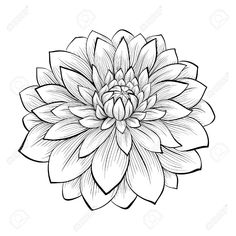 Vector - beautiful monochrome black and white dahlia flower isolated on white background. Hand-drawn contour lines and strokes. Dahlia Flower Tattoos, Beautiful Flower Tattoos, Flower Tattoo Designs, Flower Tattoo Hand, Outline Drawings, Tattoo Outline, Black Tattoos, Small Tattoos, Dalia Flower