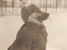 Embedded image permalink Military dog