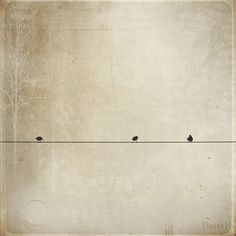 bird(s) on a wire...
