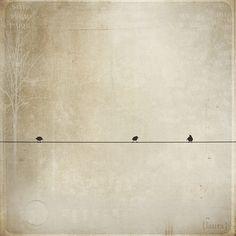 bird(s) on a wire...