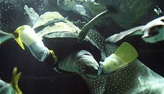La tartaruga salvata dalle protesi