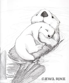 Imgs For > Cute Sea Otter Drawing