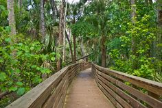 Black Hammock is a bit of Old Florida in Oviedo, with a trail showcasing a delightfully long boardwalk and a loop through scrub habitats above Lake Jesup