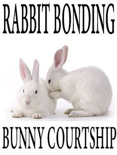 Rabbit bonding: bunny courtship