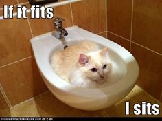 Cats will sit in anything . . . If I Fits... I Sits!