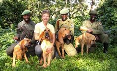 In eastern Congo's Virunga National Park, the newest weapon against poachers are dogs! The hounds use their keen sense of smell to track and arrest poachers. Each team, made up of a bloodhound and a ranger, takes two years to train, and so far they've been successful in their goals. To find out more or donate, you can go here.