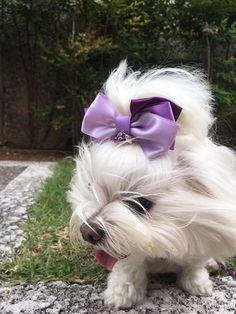 Laço de fita de cetim, feito à mão, para prender no topete dos cães, nas cores roxo e lilás, com pingentes de coração e pérolas. Vai deixar seu animal de estimação cheio de estilo e charme.